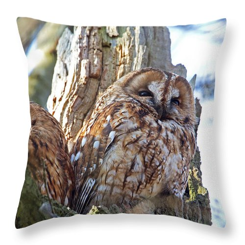 Tawny Owl Throw Pillow featuring the photograph Tawny Owls by Bob Kemp