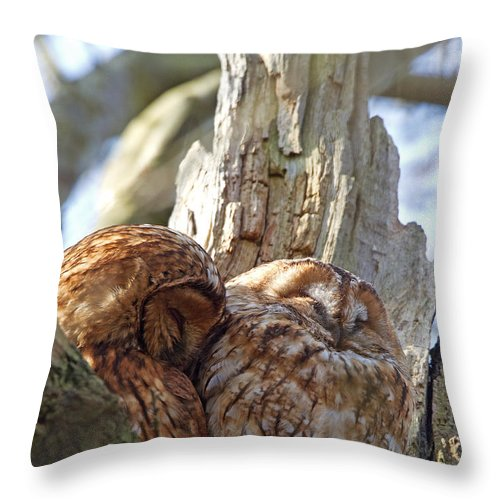 Tawny Owl Throw Pillow featuring the photograph Tawny Owls In Love by Bob Kemp