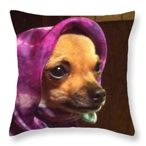 Puppy Throw Pillow featuring the photograph Tea Cup Wearing Silk by Beverly Johnson