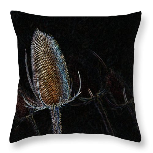 Teasel Throw Pillow featuring the photograph Teasel Glow by Bel Menpes