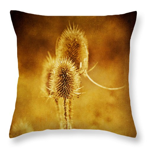 Teasel Throw Pillow featuring the photograph Teasel Group by John Edwards