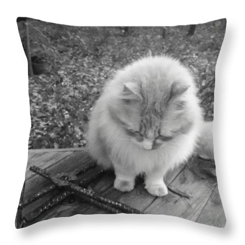 Deborah Throw Pillow featuring the photograph Ted In Black And White by Deborah Montana