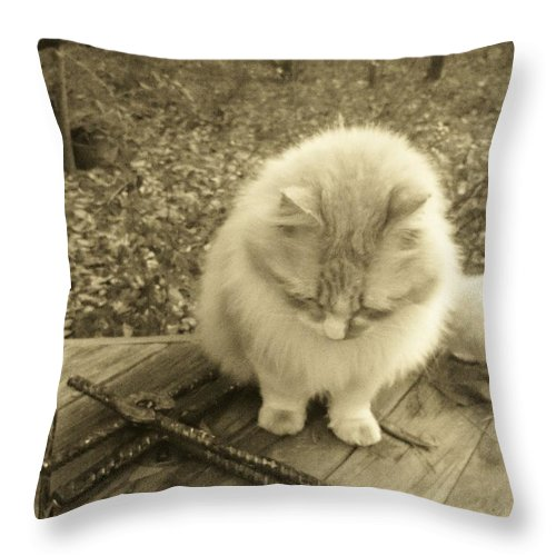 Cat Throw Pillow featuring the photograph Ted In Sepia Tone by Deborah Montana
