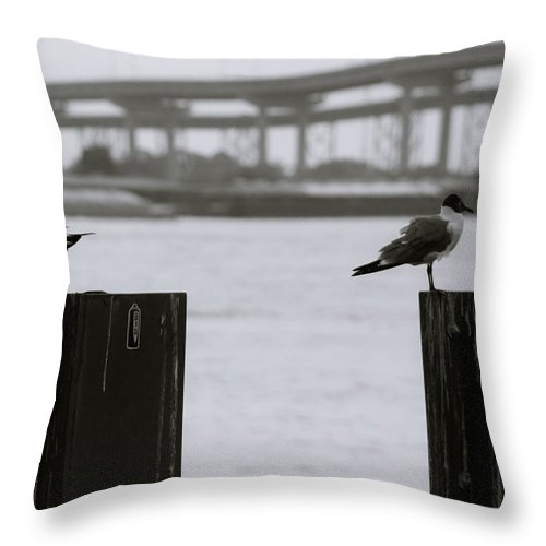 Perched Throw Pillow featuring the photograph Tern-ing Your Back by Eugene Campbell