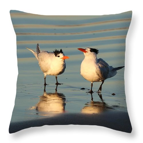 Wild Throw Pillow featuring the photograph Terns On The Beach by Christy Pooschke