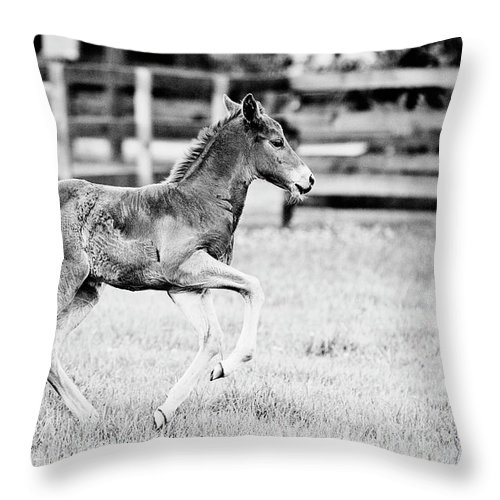 Horse Throw Pillow featuring the photograph Testing The Wheels - Bw by Scott Pellegrin
