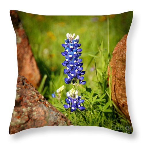 Landscape Throw Pillow featuring the photograph Texas Bluebonnet by Jon Holiday