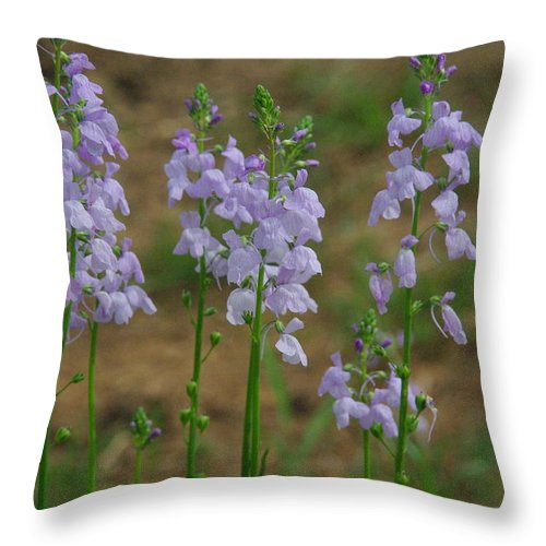 Wildflower Throw Pillow featuring the photograph Texas Toad Flax by Robyn Stacey