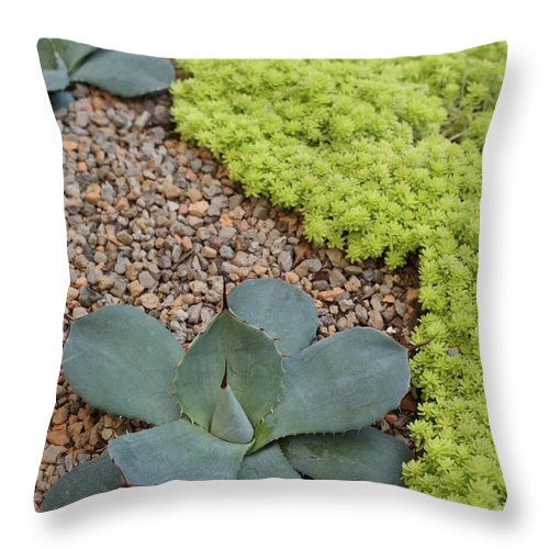 Cacti Throw Pillow featuring the photograph Texture by Shelley Jones
