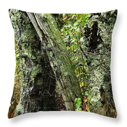 Ancient Throw Pillow featuring the photograph The Ancient Landmark by Thomas R Fletcher