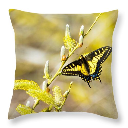 Anise Swallowtail Papilio Zelicaon Throw Pillow featuring the photograph the Anise Swallowtail feeding in the trees by Royal Tyler