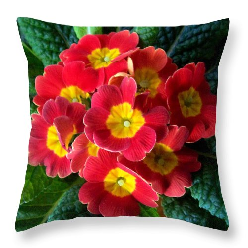 Flower Throw Pillow featuring the photograph The Bang by Rose Guay