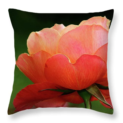 Rose Throw Pillow featuring the photograph The Beauty Of A Rose by Christiane Schulze Art And Photography