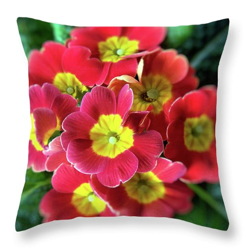 Flower Throw Pillow featuring the photograph The Big Bang by Rose Guay