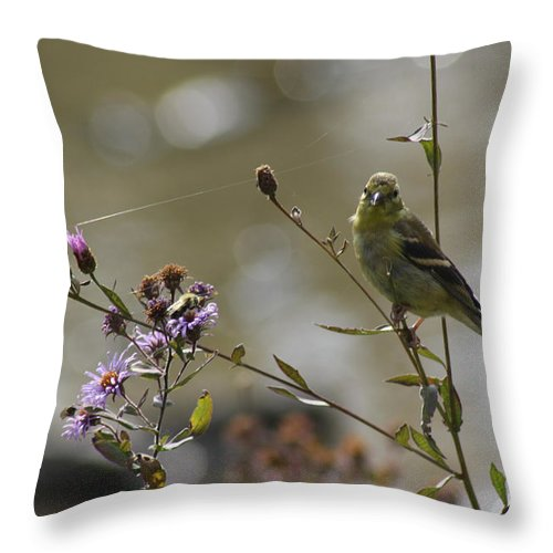 Birds Throw Pillow featuring the photograph The Birds And The Bees by Cathy Beharriell