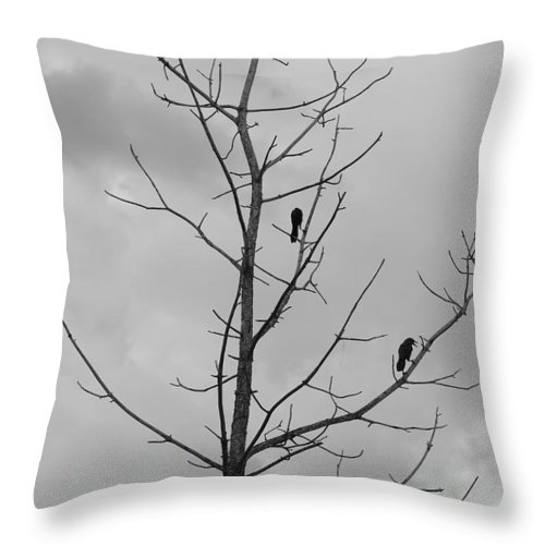 Tree Throw Pillow featuring the photograph The Birds by Rob Hans