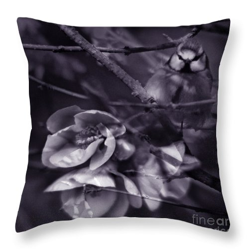 Blue Throw Pillow featuring the photograph The Blue Tit by Angel Ciesniarska