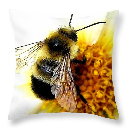 Honeybee Throw Pillow featuring the photograph The Buzz by Will Borden