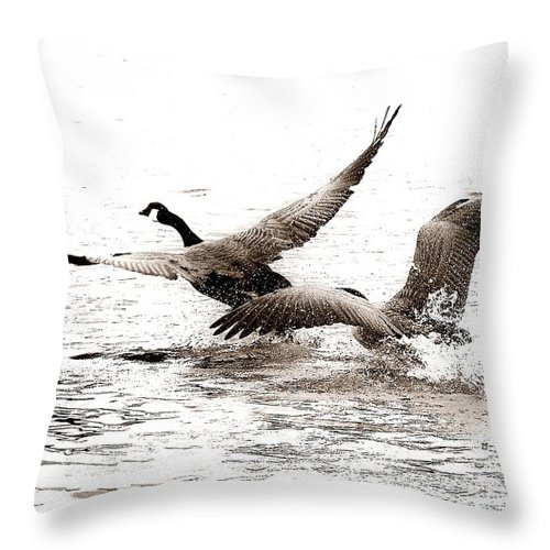 Birds Throw Pillow featuring the photograph The Chase by Angie Tirado