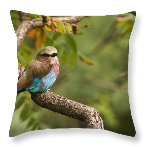 Bird Throw Pillow featuring the photograph The Conspicuous Roller by Chad Davis