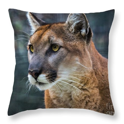 Mountain Lion Portrait Throw Pillow featuring the photograph The Cougar by Mitch Shindelbower