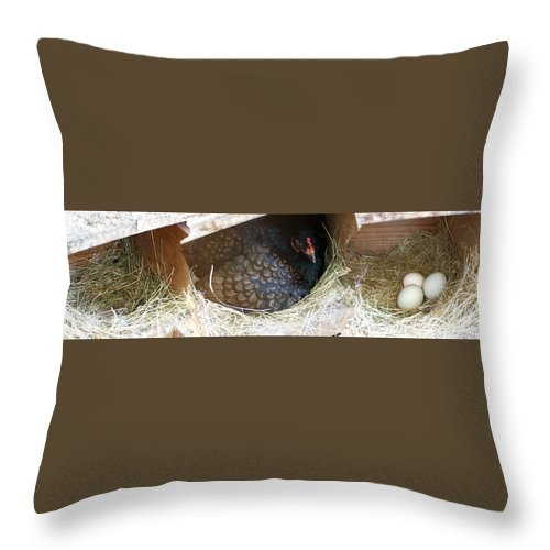 Digital Photography Artwork Throw Pillow featuring the photograph The Coup by Laurie Kidd