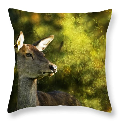 Deer Throw Pillow featuring the photograph The Deer by Angel Ciesniarska