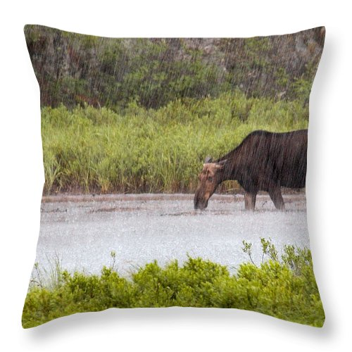 Moose Throw Pillow featuring the photograph The Downpour by Linda McRae