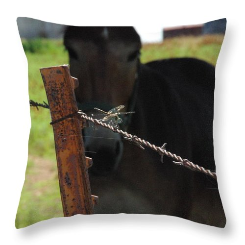 Common Whitetail Dragonfly Throw Pillow featuring the photograph The Dragonfly And The Mule by Robyn Stacey