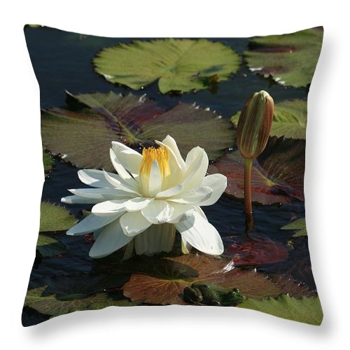 Lotus Throw Pillow featuring the photograph The Empress And Attendant by David Dunham