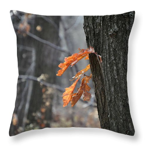 Tree Throw Pillow featuring the photograph The End Of Fall by Trish Tritz