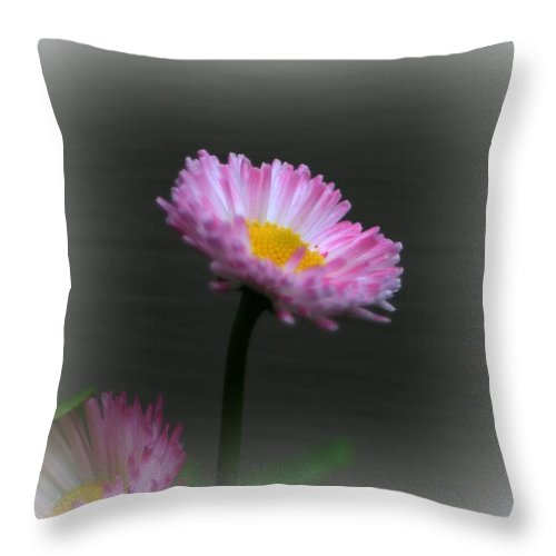 Flower Throw Pillow featuring the photograph The English Daisy by Barbara S Nickerson