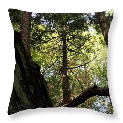 Tree Throw Pillow featuring the photograph The Fallen Triangle by Amanda Barcon