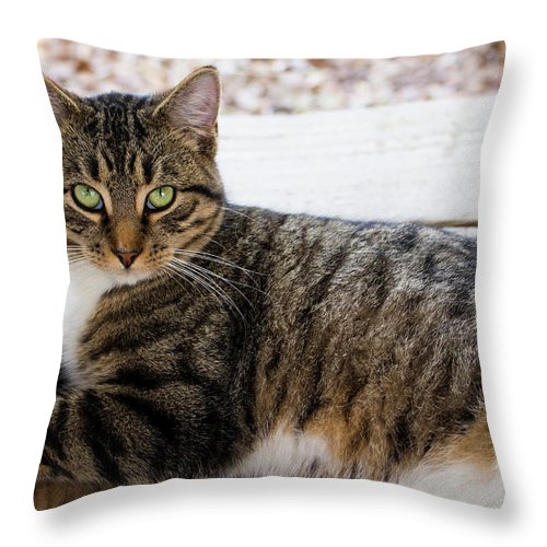 Cats Throw Pillow featuring the photograph The Ferals-1412 by Oonabot Photography