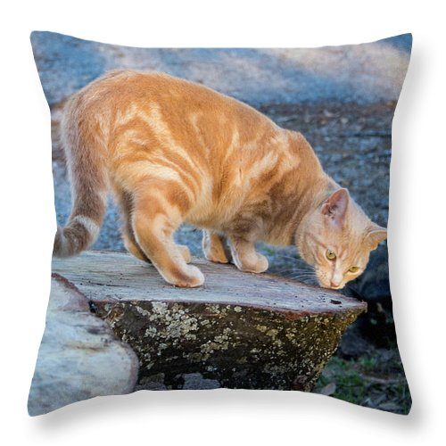 Cats Throw Pillow featuring the photograph The Ferals-1451 by Oonabot Photography