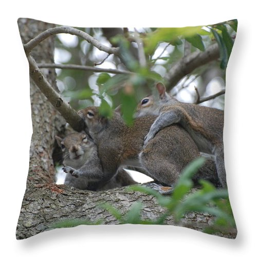 Squirrels Throw Pillow featuring the photograph The Fight For Life by Rob Hans