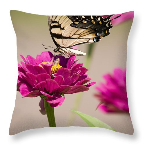 Butterfly Throw Pillow featuring the photograph The Flower And Butterfly by Chad Davis