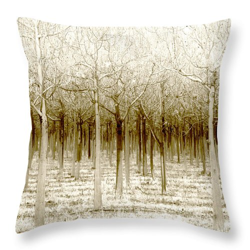Landscape Throw Pillow featuring the photograph The Forest For The Trees by Holly Kempe