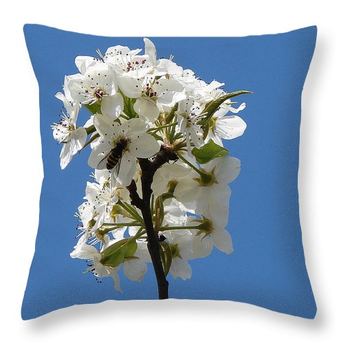 Throw Pillow featuring the photograph The Fruits Of Spring by Luciana Seymour
