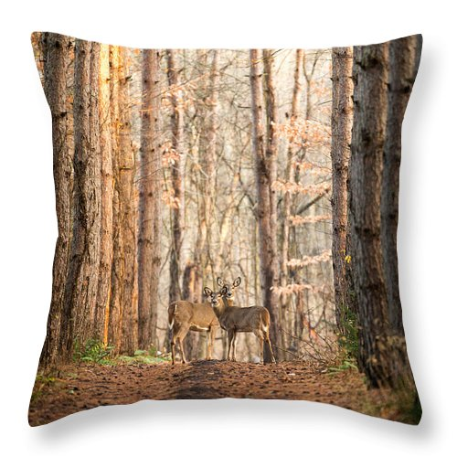 Deer Throw Pillow featuring the photograph The Gift by Everet Regal