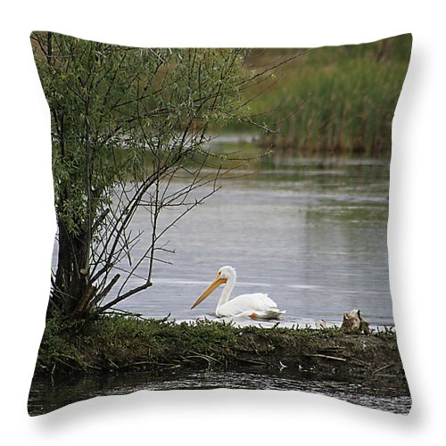 Goose Throw Pillow featuring the photograph The Goose And The Pelican by Alyce Taylor