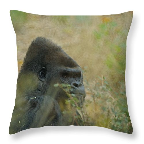 Animals Throw Pillow featuring the photograph The Gorilla 5 by Ernie Echols