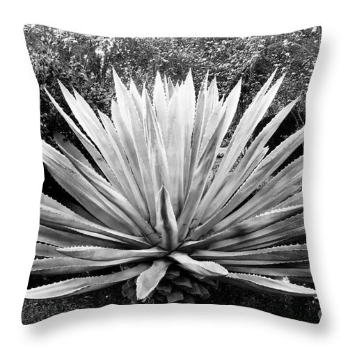Agave Throw Pillow featuring the photograph The Great Agave by David Lee Thompson
