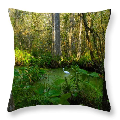 Corkscrew Swamp Throw Pillow featuring the photograph The Great Corkscrew Swamp by David Lee Thompson