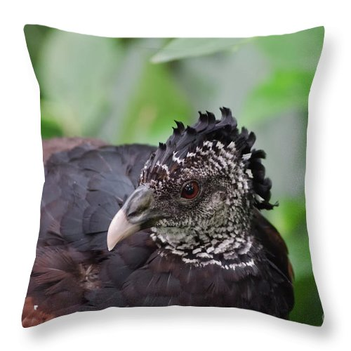 Michelle Meenawong Throw Pillow featuring the photograph The Great Curassow 3 by Michelle Meenawong