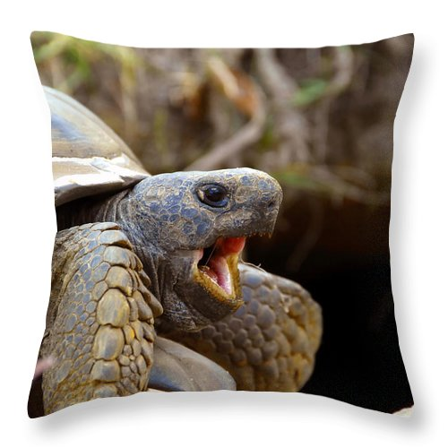 Gopher Tortoise Throw Pillow featuring the photograph The Great Gopher Tortoise by David Lee Thompson