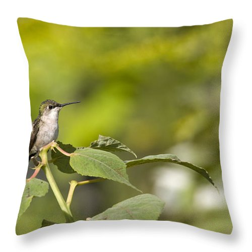 Hummingbird Throw Pillow featuring the photograph The Green Hummingbird by Chad Davis