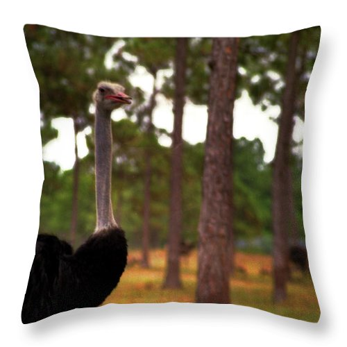 Ostrich Throw Pillow featuring the photograph The Grove by Wayne King