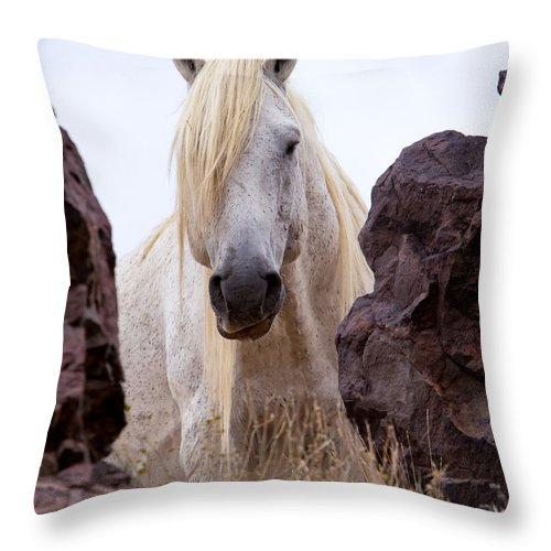 Horse Throw Pillow featuring the photograph The Hideout by Kent Keller