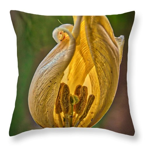 The Inner Sanctum Throw Pillow featuring the photograph The Inner Sanctum by Mitch Shindelbower